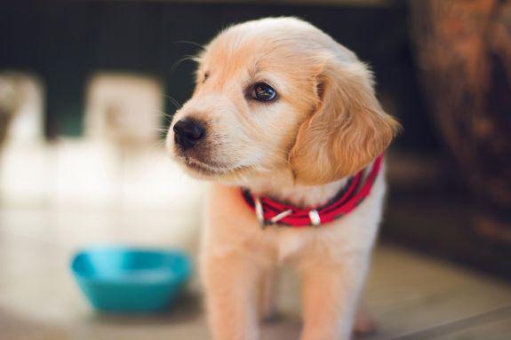Vacances amb gos: més alegries que inconvenients